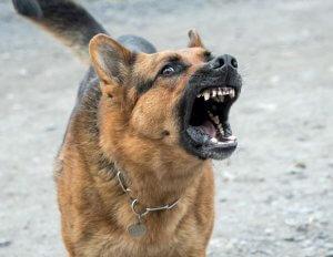 dog-2141358_960_720