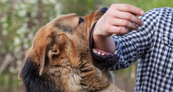 Dog Bites Attorney